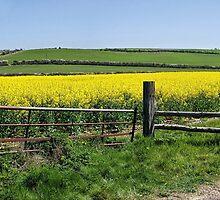 Gateway To Golden Fields by Susie Peek