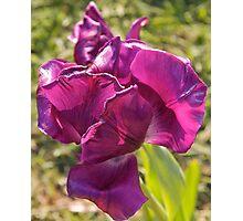 Dutch Flowers Photographic Print