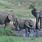 Elephant Mud Bath, Tarangire National Park, Tanzania, Africa (Y) by Adrian Paul