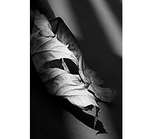 Curled Leaf Photographic Print