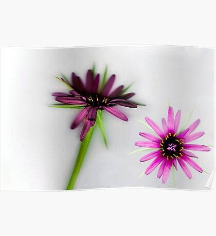 Pink Star Flower Poster
