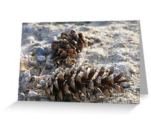 Beached Cones Greeting Card