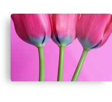 A study in pink 2 Metal Print