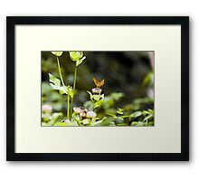 Lightness - Austria Framed Print