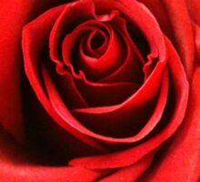 Red Rose Bloom Sticker