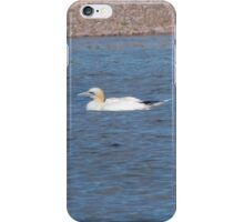 Northern Gannet iPhone Case/Skin