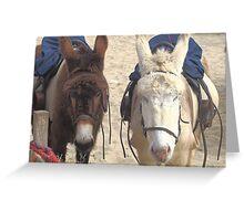 Beach Donkeys Greeting Card