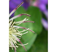 Spider Legs Photographic Print