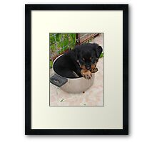 Rotts for Dinner? Framed Print