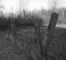 When The Old Fence Was by Sam Clarke