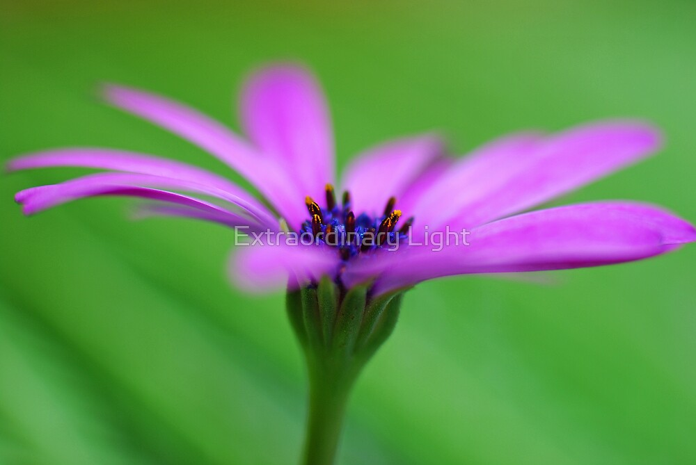 Blowing in the wind by Renee Hubbard Fine Art Photography