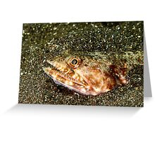 Lizardfish hiding in black sand... Greeting Card