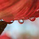 Dripping Dogwood by SKNickel