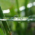 liquid sunshine by SKNickel