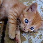 a kitten named watson by Tracy Engle