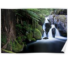 Taggerty river, the Beeches Poster