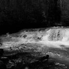 Dismal Falls in B&W  with video by virginian