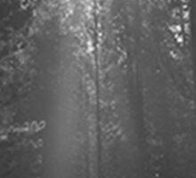 Ohio Forest Sticker
