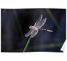 Dragonfly D10 Poster