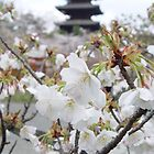 Sakura - Kyoto, Japan by aerdeyn