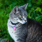 Bethesda cat by Thad Zajdowicz