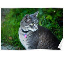 Bethesda cat Poster