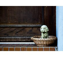 Watchdog Photographic Print