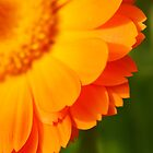 Marigold - Uno by rabeeker