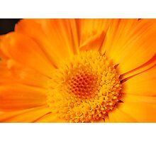 Marigold - Dos Photographic Print