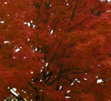 Maple Tree Sticker