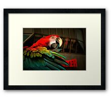 Fixing my Feathers Framed Print