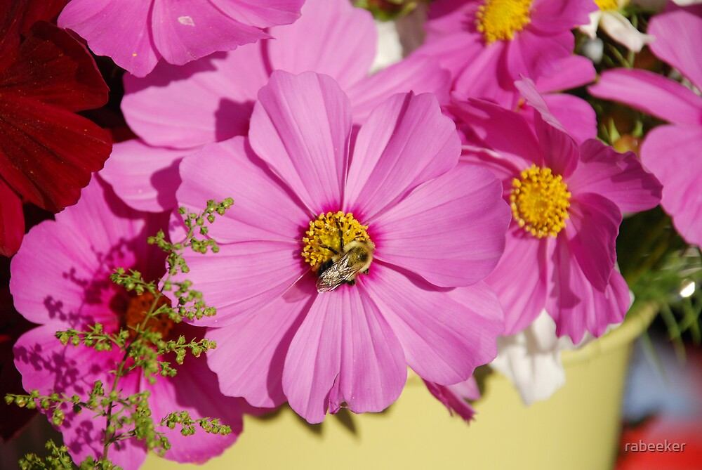 Market - Bee Cosmos by rabeeker