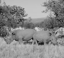 Safari - Rhino Family by rabeeker