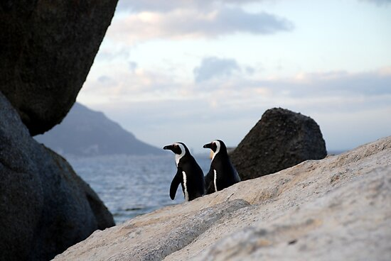 Safari - Penguin Love by rabeeker