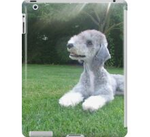 Special Bedlington Terrier