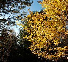 In the Autumn Forest by Marcin Retecki