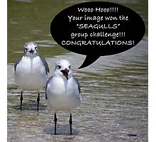 Seagulls Challenge Photographic Print
