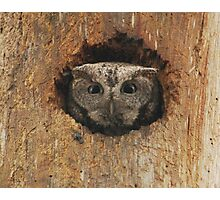 Hoot in a hole Photographic Print