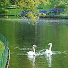 Swans' talk by adagi0