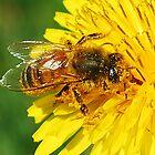 Honey Bee by Sheri Nye