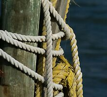 Rope on piling by Larry  Grayam