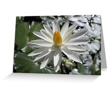White Light Greeting Card