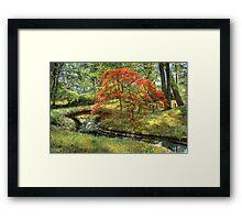 Spring - Japanese Maple Framed Print