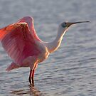 morning  stretch by kathy s gillentine