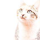 Watchful Eyes by Belinda Osgood