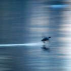 Duck in motion blur by Arve Bettum