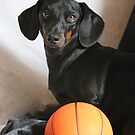 Wanna Play Ball? by Lori Walton
