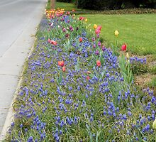 Roadside Garden by James Brotherton