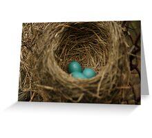 robin's eggs/nest Greeting Card