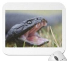 Zazzle.com Mouse pad by Thow's Photography